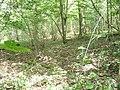 Northfield Wood - geograph.org.uk - 1324814.jpg