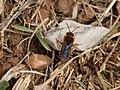 Nostres amics, els insectes - Nuestros amigos, los insectos - Friends insects (5168415629).jpg