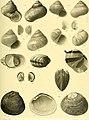 Nova Guinea - résultats de l'expédition scientifique néerlandaise à la Nouvelle-Guinée en 1903(-1920) (1915) (14593583980).jpg