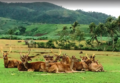 Ocampo deer farm.png