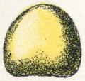 Oeufs002b,59.png