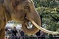 Oji zoo, Kobe, Japan (1505342198).jpg