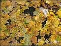 Oktober - panoramio (3).jpg