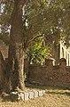 Old Shade Tree In The Churchyard (2856418575).jpg