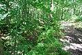 Oldbury Woods - geograph.org.uk - 856752.jpg