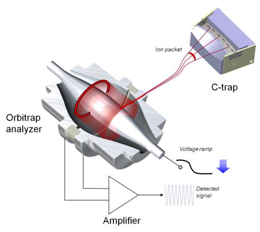 OrbitrapMA&Injector