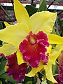 Orchid from Thailand 3.jpg