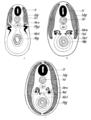 Origin of Vertebrates Fig 159.png