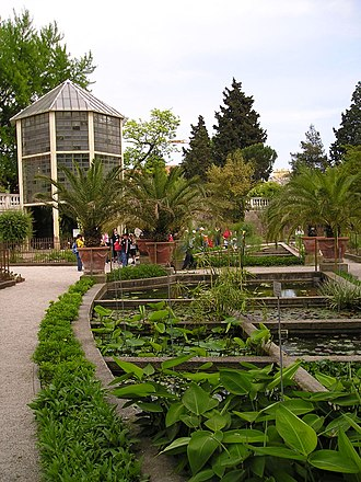 "Orto botanico di Padova - Tanks of aquatic plants and the ""Goethe palm"" greenhouse."