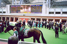 Ouja Board,worth millions dollarrs at Sha-tin Paddock 2005..jpg