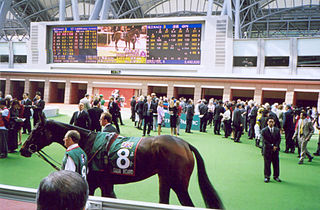 Ouija Board (horse) British-bred Thoroughbred racehorse