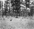 PSM V59 D128 Black mesa reservation overgrazing.png