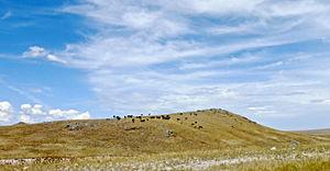Bleu Horses - Bleu horses installation as seen from Highway 287