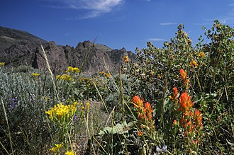 Humboldt County, Nevada - Wildflowers in Paradise Valley, 2008