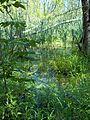 Parc-nature du Bois-de-l-ile-Bizard 49.jpg