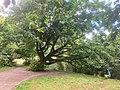 Park Het Engels Werk, Zwolle,Ijssel Spoolderhank Schelle 12 31 51 333000.jpeg