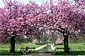 Park between Bosweg and Th. a Kempisweg Arnhem with several Prunustree - panoramio.jpg