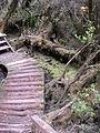 Parque nacional Chiloe-Ruta El Tepual.JPG