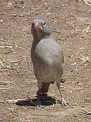 Tanzania 2948 Nevit.jpg