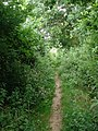 Path to Broadclyst - geograph.org.uk - 1371617.jpg