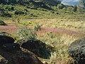 Pedra montada em Poços de Caldas - MG, Brasil - panoramio (18).jpg