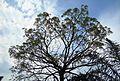Pepohonan di semak belukar (8).JPG