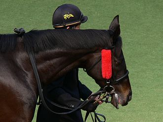 Blinkers (horse tack) - Winkers on an Australian racehorse.