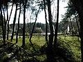 Pescara Riserva naturale di interesse provinciale Pineta Dannunziana0003.JPG