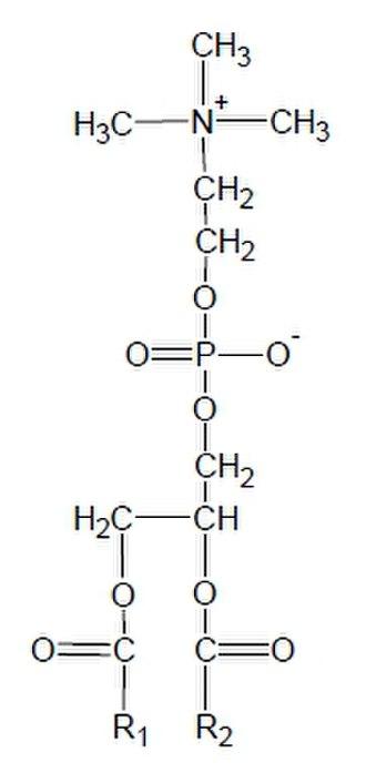 Phosphatidylcholine - Image: Phosphatidylcholine