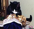Photograph of Socks the Cat Peeking into his Christmas Stocking- 12-21-1993 (6461514427) (cropped1).jpg