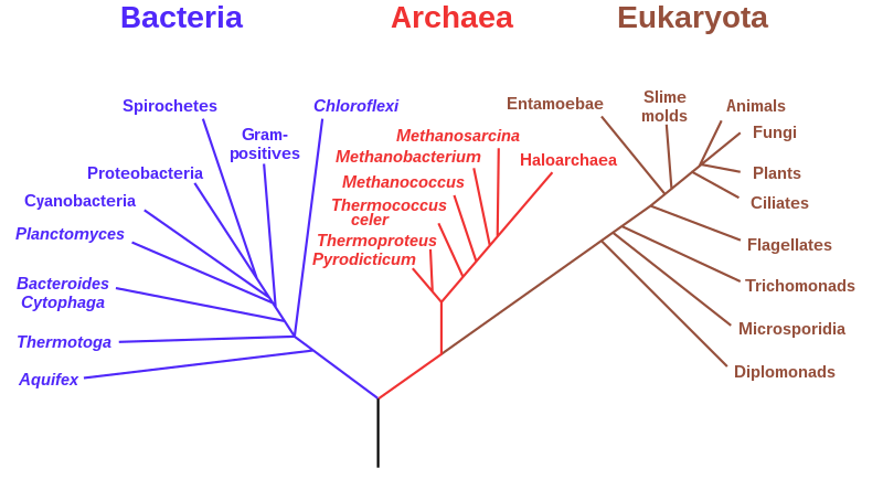 File:Phylogenetic tree.svg