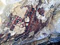 Pictographs at Painted Rock9.jpg