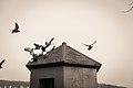 Pigeons in Lindenhof.jpg