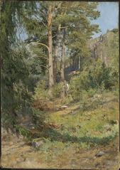 Pine Forest Skutudden