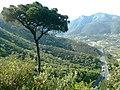 Pinea Borghetto.jpg