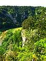 Pines - panoramio (14).jpg