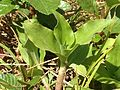 Plants (12).JPG