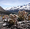 Plants on mountain 2.jpg