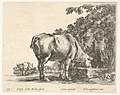 Plate 12- a cow drinking from a stone trough, other cows to left in background, from 'Diversi capricci' MET DP833189.jpg