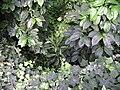 Poland. Warsaw. Powsin. Botanical Garden 125.jpg
