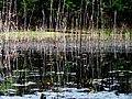 Pond Cameron NC 3857 (15568572977).jpg