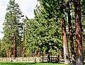 Ponderosa Forest, Sisters, OR 9-13 (14799448233).jpg