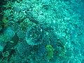 Port Ghalib march 2006-0054.jpg