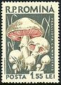 Posta Romana - 1958 - mushroom 1,55LEI.jpg