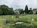 Pré à Druyes-les-Belles-Fontaines, chevaux, juin 2019.jpg