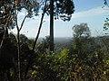 Prašuma u provinciji Ratanakiri.jpg