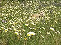 Primavera na Arriba. 02.jpg