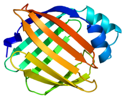 Protein RBP1 PDB 1crb.png