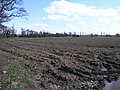 Puddle and Field - geograph.org.uk - 147516.jpg