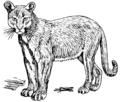 Puma 2 (PSF).png